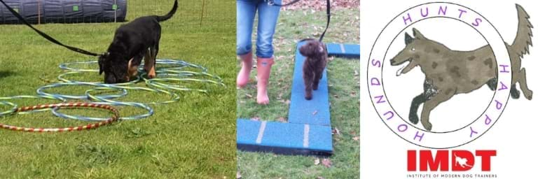 We use modern dog training methods